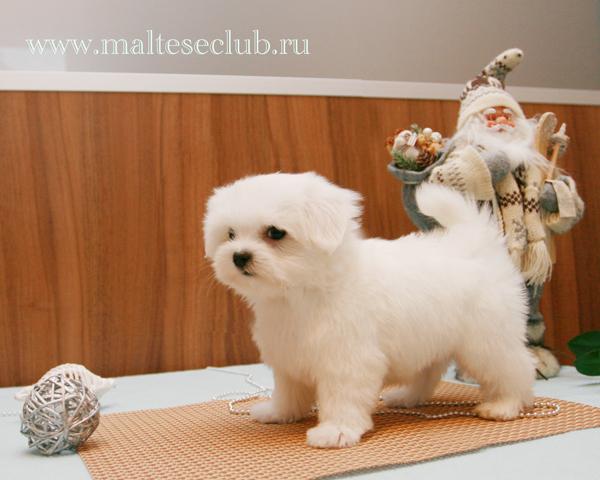 Корм для Собак Мелких Пород Royal Canin — Купить